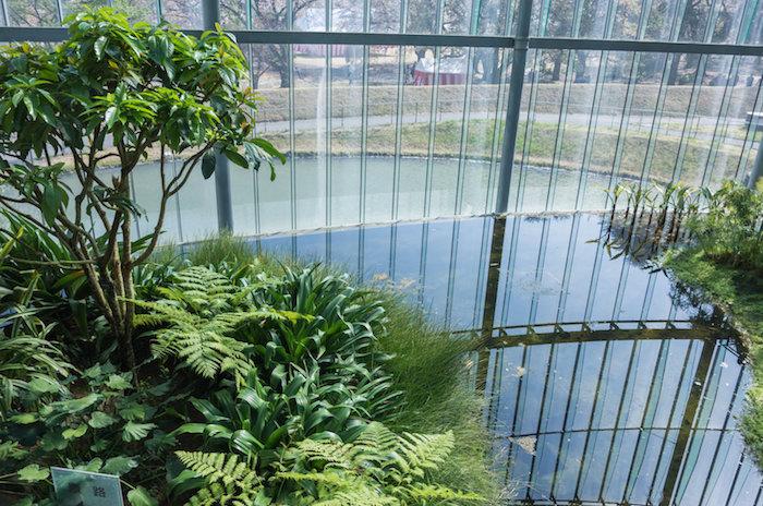 都会のオアシス、新宿御苑の大温室に行って植物・花を堪能してきた