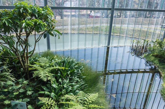 都会のオアシス、新宿御苑の大温室に行って植物・花を撮影してきた