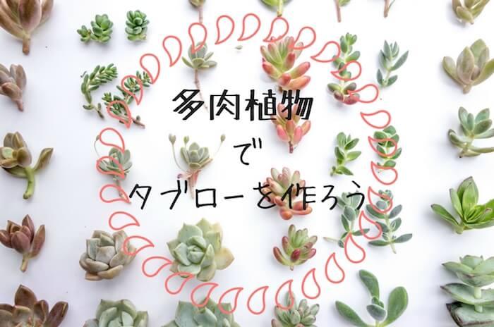 壁に飾って楽しむ多肉植物タブロー(額飾り)の作り方