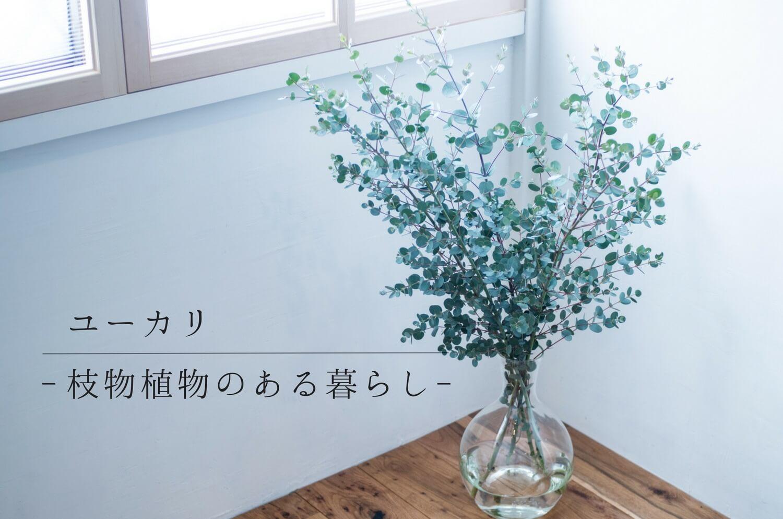 秋冬に飾りたい爽やかで丸葉がかわいいユーカリの枝:枝物植物のある暮らし No.01