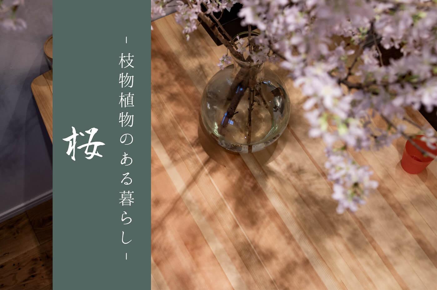 部屋に桜の枝を活ける贅沢:枝物植物のある暮らし No.02