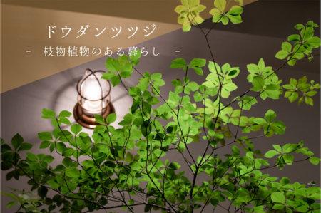 高原に生える雑木の清々しさを部屋にもたらしたドウダンツツジ:枝物植物のある暮らし No.03
